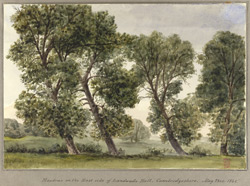 Meadows on the East Side of Landwade Hall, Cambridgeshire May 23rd 1848